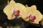 На выставке орхидей